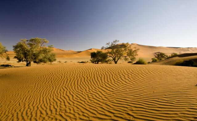 BBC Nature - Desert videos, news and facts