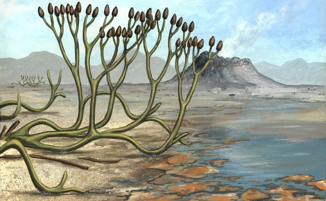 Pictures of the Devonian Period http://www.bbc.co.uk/nature/history_of_the_earth/Devonian