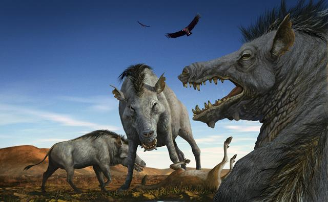 A pack of a large, prehistoric, pig-like animals called Entelodons