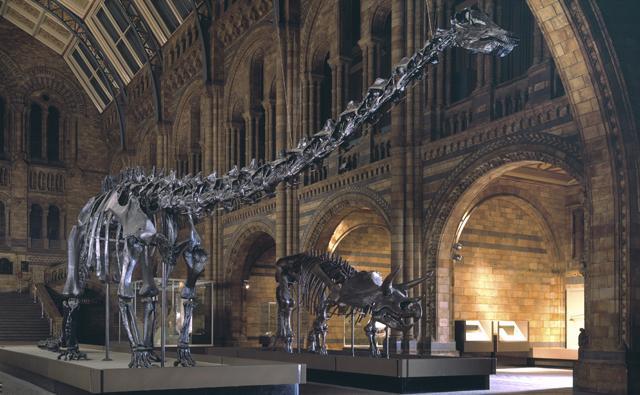 BBC Nature - Fossils