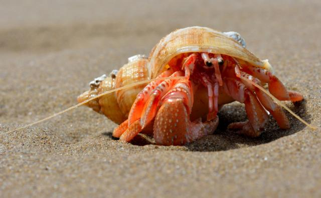 how to make your hermit crab happy