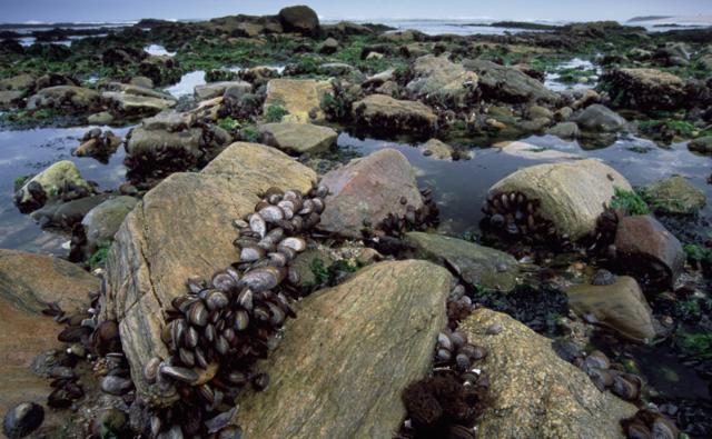 Intertidal+Zone... Rocky Intertidal Zones