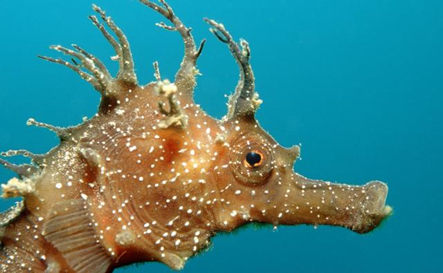 Rare seahorse habitat wiped out by boat anchors