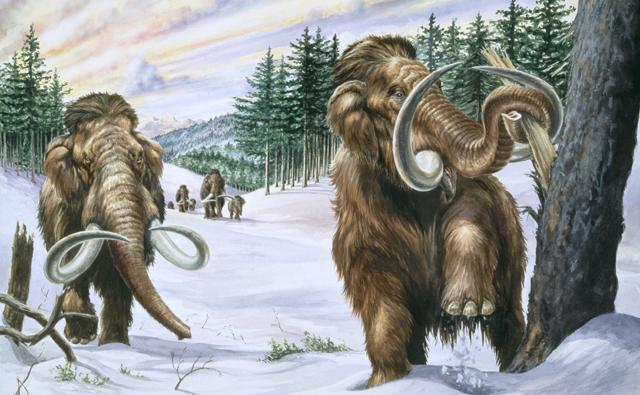 A pair of woolly mammoths in their natural habitat
