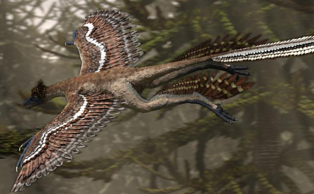 Microraptor in flight