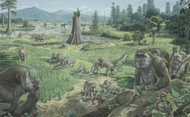 A group of ankarapithecus apes during the Miocene epoch
