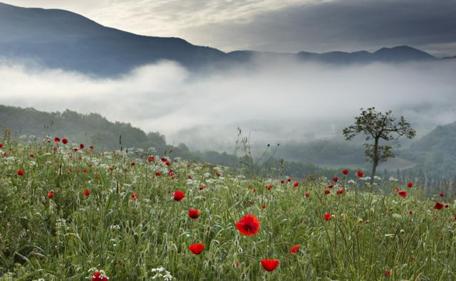 A poppy field in the mountains of Italy