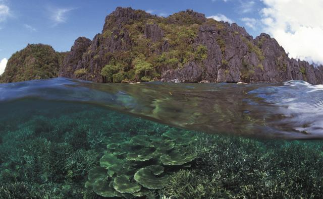 Coral reef split level on the Philippines