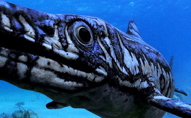 Close-up of an Ophthalmosaurus swimming underwater