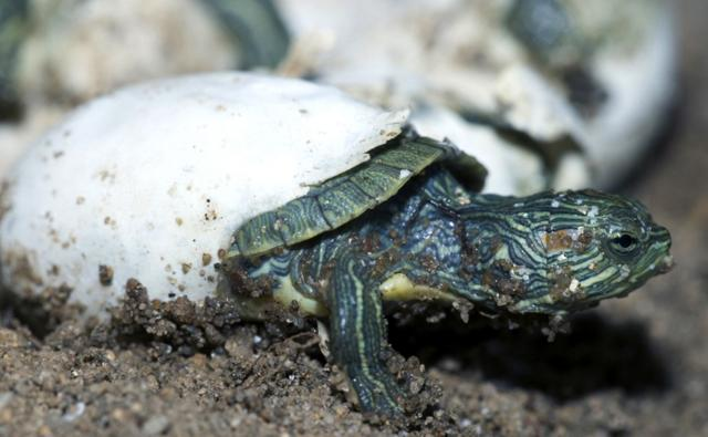 Animals That Hatch from Eggs http://www.bbc.co.uk/nature/adaptations/Oviparity