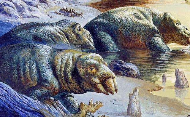 Three mammal-like reptiles, known as placerias, standing in water