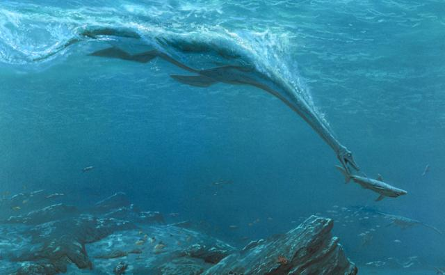 A long-necked plesiosaur hunts a shark in shallow waters