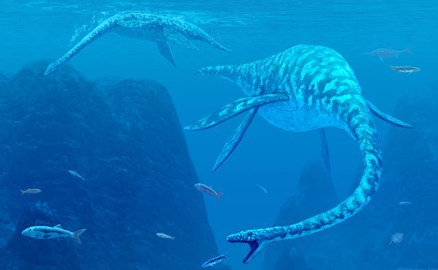 Two prehistoric marine reptiles (Elasmosaurus) catching fish underwater