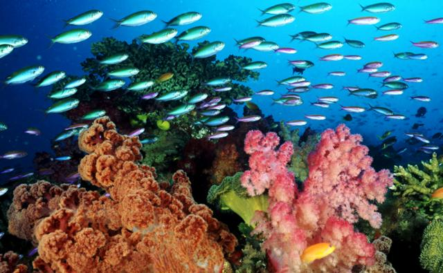 Coral reefs off of Fiji