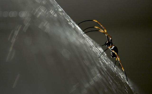 Close-up of a spider spinning a web