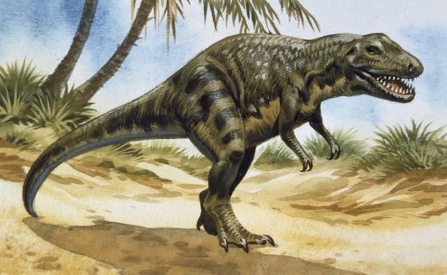 Tarbosaurus, a large carnivore in the tyrannosaurus family