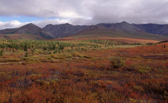 Alaskan tundra in autumn colours