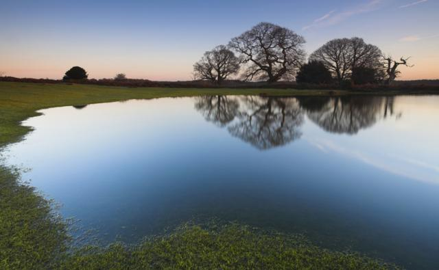 Pond in England&#039;s New Forest National Park