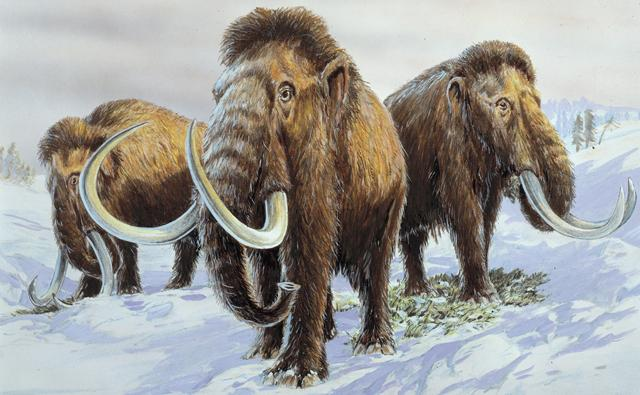 [Image: woolly_mammoth_1.jpg]