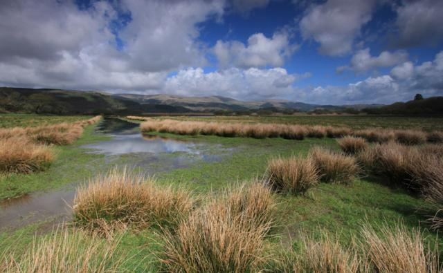 The Ynys-hir RSPB nature reserve in Wales.