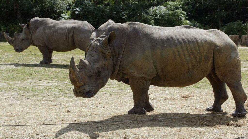 E Rhino Productions Poachers kill rhino fo...