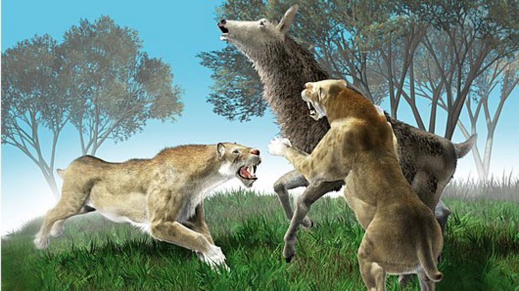 Did our ancient ancestors ' kill the cat'? - BBC News