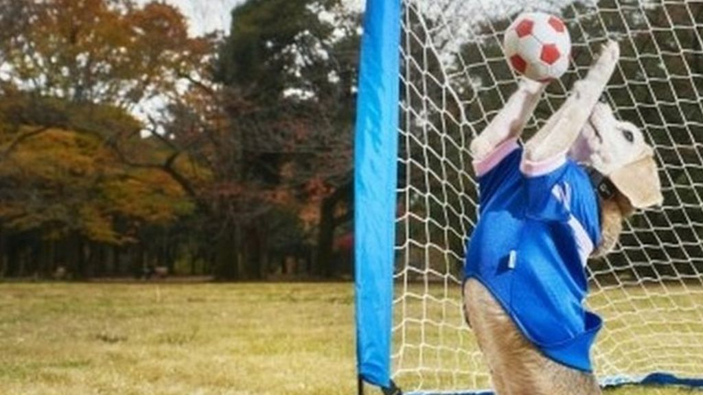 Goal-keeping dog breaks Guinness World Record - BBC News