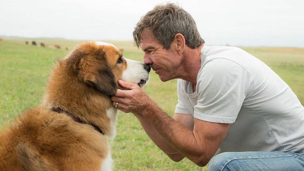 A Dog\'s Purpose filmmakers face animal cruelty accusations