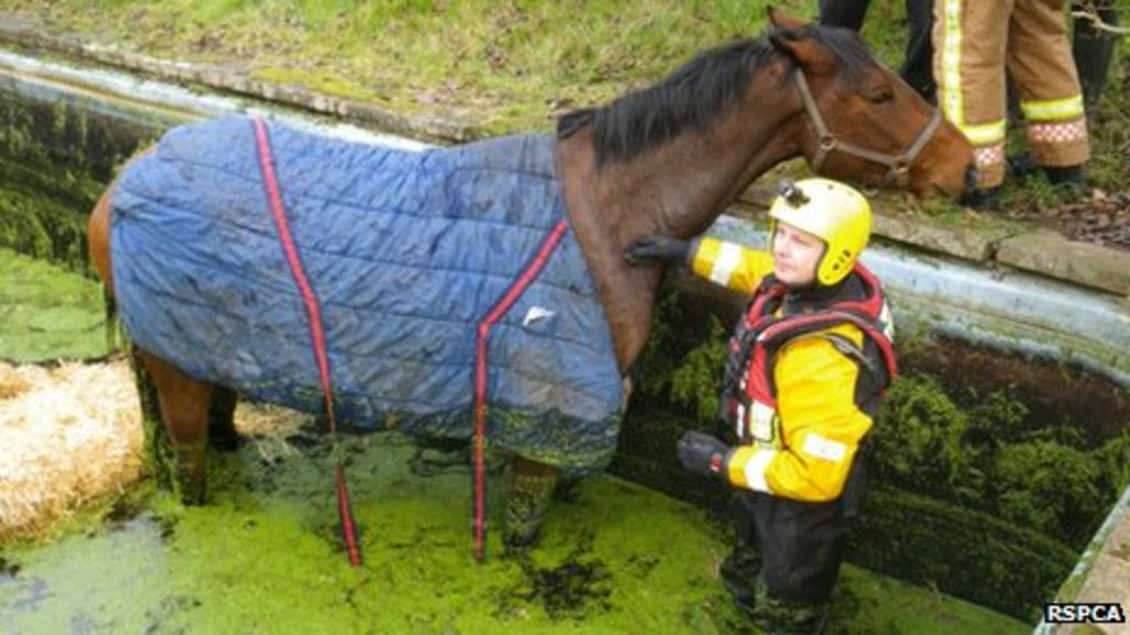 Horse Rescued From Swimming Pool In Worcestershire Bbc News