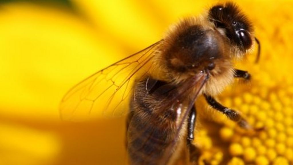 Bee rustlers add to misery of struggling hive owners - BBC ...