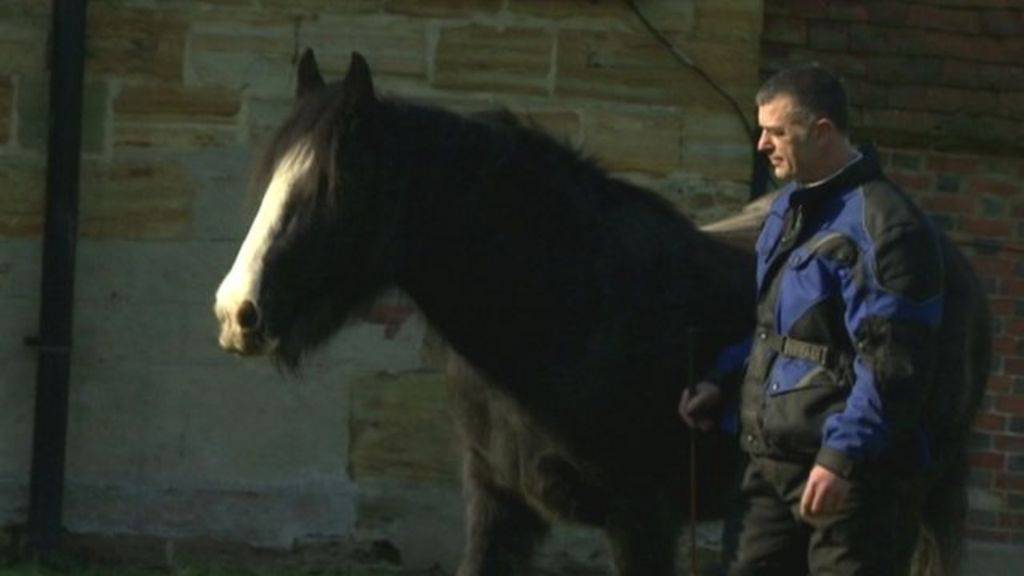 Horse therapy helps soldier's mental scars - BBC News