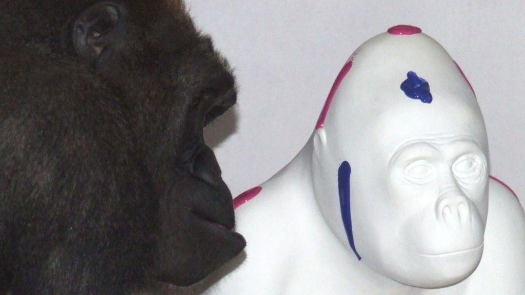 N'dowe Gorilla Paignton zoo gorilla N...
