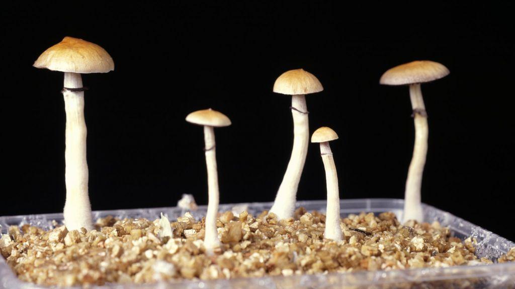 Study: Psilocybin, the Drug in 'Magic Mushrooms,' Lifts ...