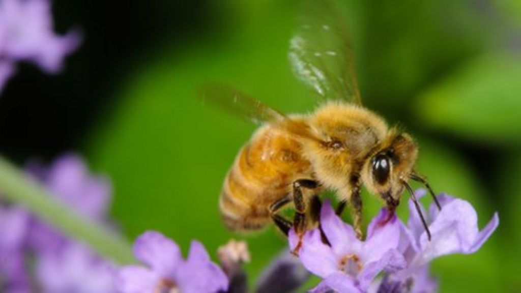 Honey bee losses double in a year due to poor winter - BBC ...