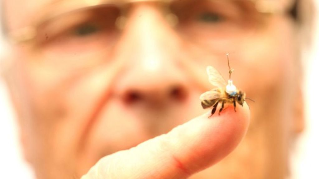 Who, what, why: How do you track a honey bee? - BBC News