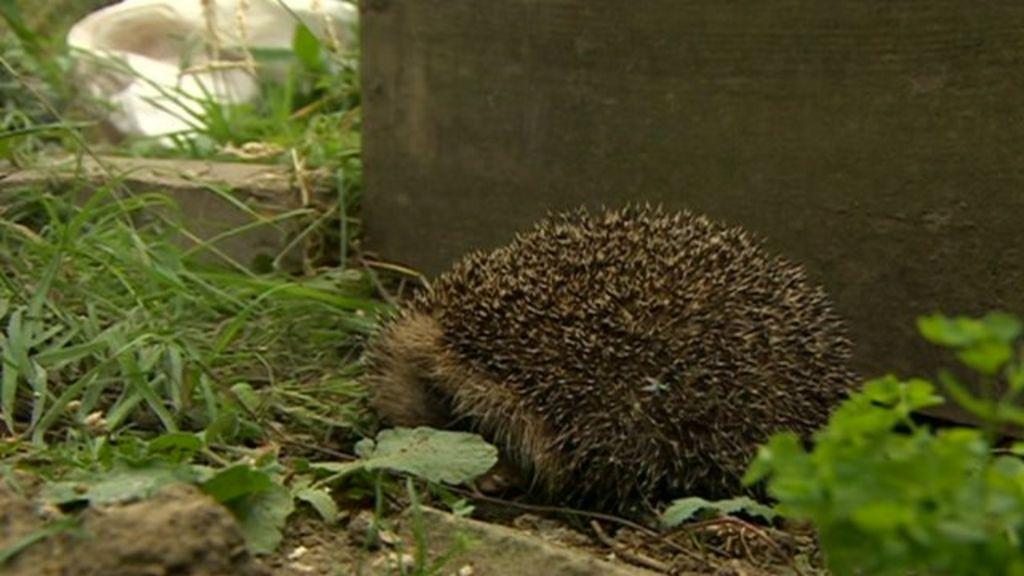 Urban wildlife 'needs encouraging'