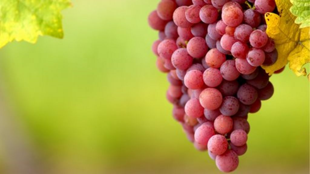 Red wine - what's behind its healthy reputation? - BBC News