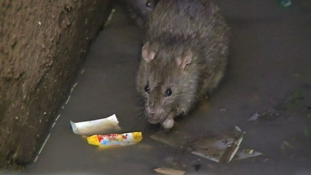 Madagascar bubonic plague threat - in 60 seconds - BBC News