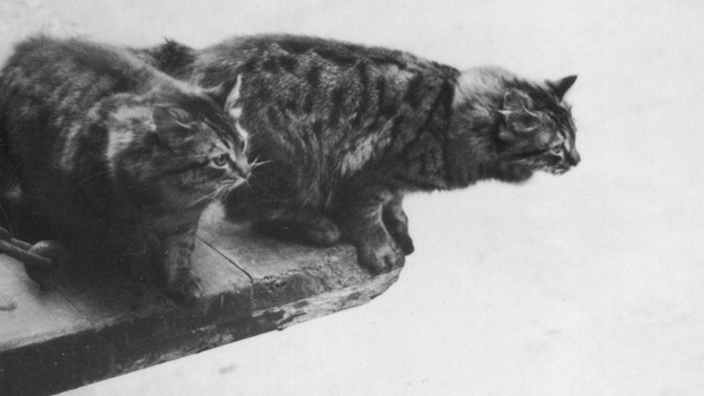 The little-told story of the massive WWII pet cull - BBC News