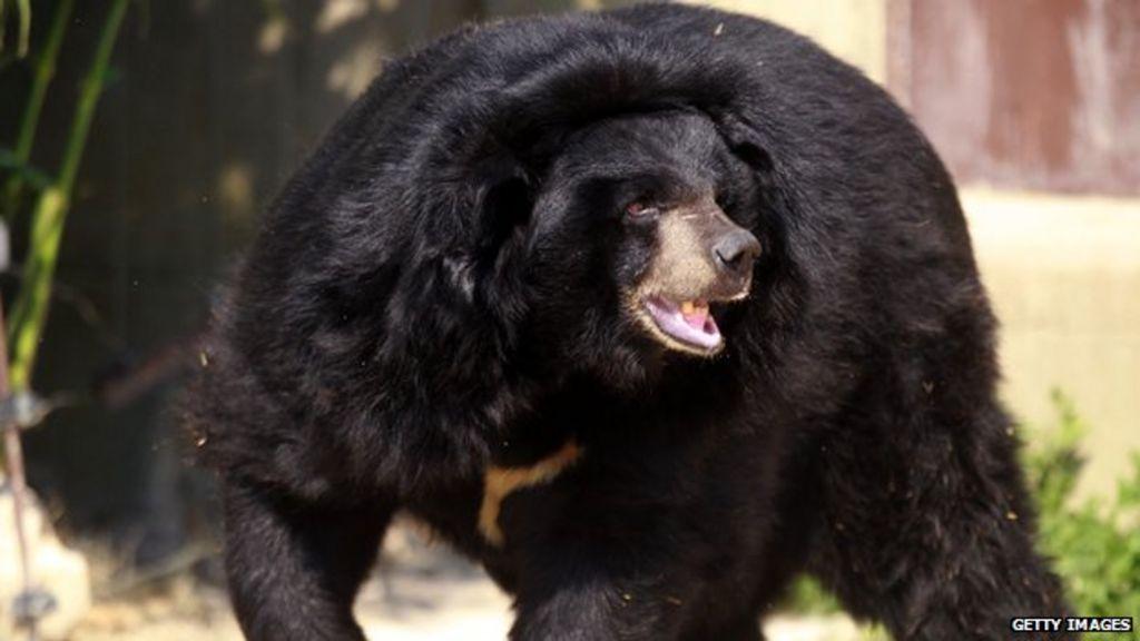 Black Dog Beer Uk
