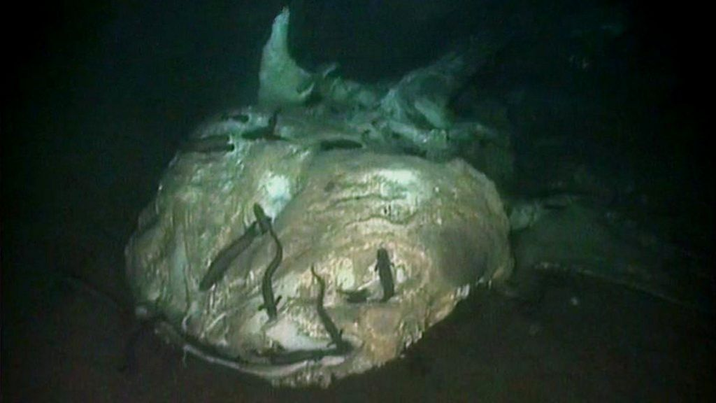 Deep Sea Graveyard Reveals Fate Of Dead Ocean Giants