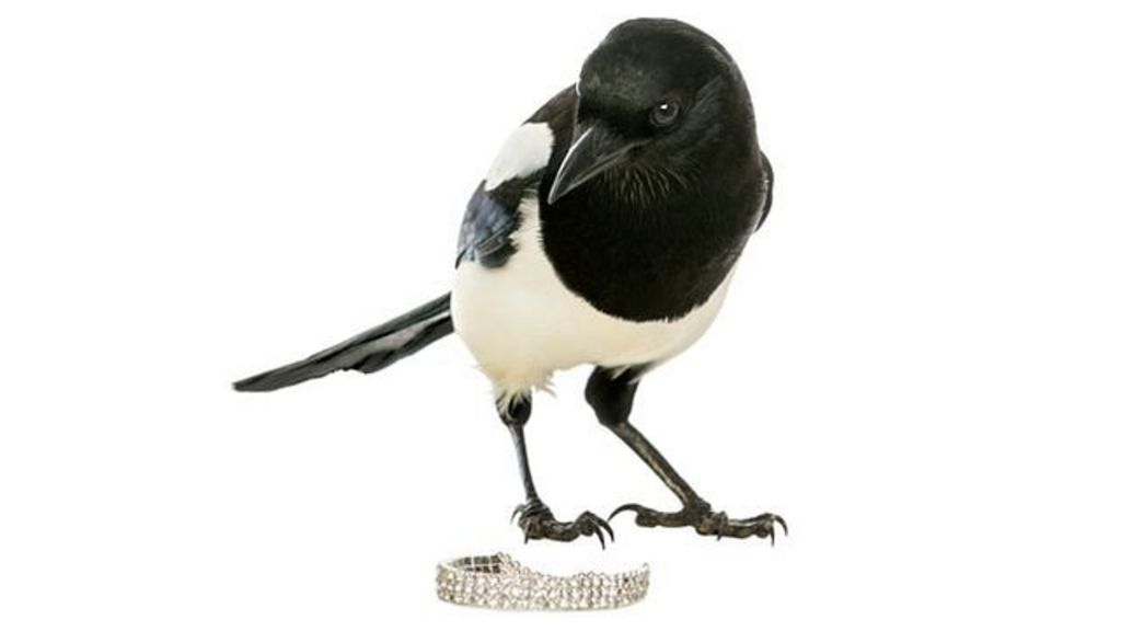 Ring Music Magpie