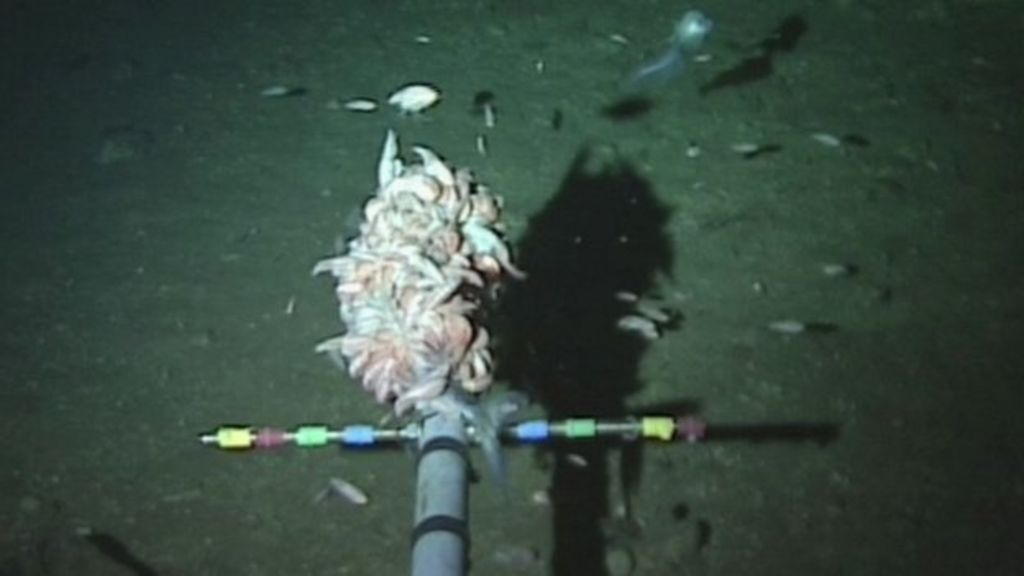 New record for deepest fish - BBC News