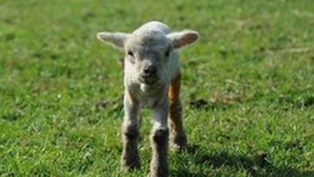 Animal cuts ireland