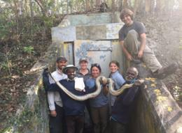 The Indian tribesmen catching giant snakes in Florida