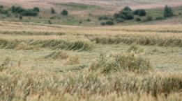 В Украине ожидается сильный ветер - ГСЧС