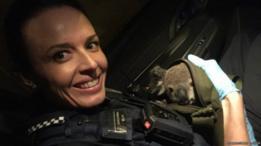 В Австралии в рюкзаке  у женщины нашли детеныша коалы