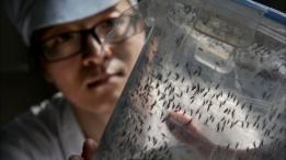 Un científico sosteniendo un panel con mosquitos