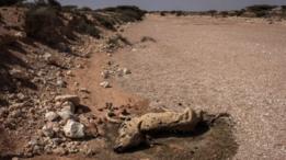 المجاعة في الصومال