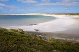 Yorke Bay, Malvinas/Falklands.